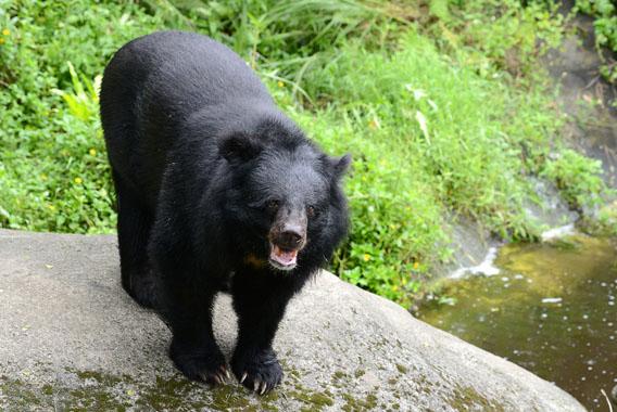 今年は特に注意!クマとの遭遇被害を防ぐ5つの対策