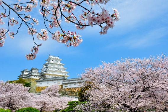 桜前線北上中!日本の「春」を新幹線から満喫しよう