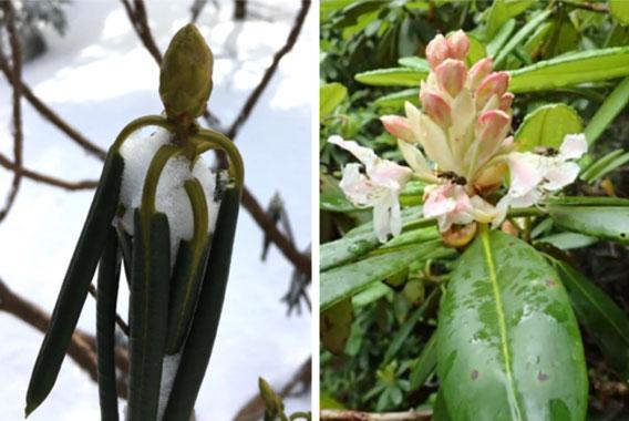 冬に楽しむオモシロ植物観察