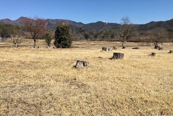土地の契約が終わり紅梅の木を整える