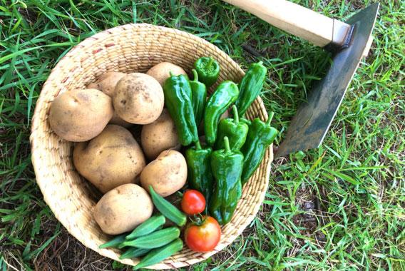 家庭菜園1年生~まずは開墾から~